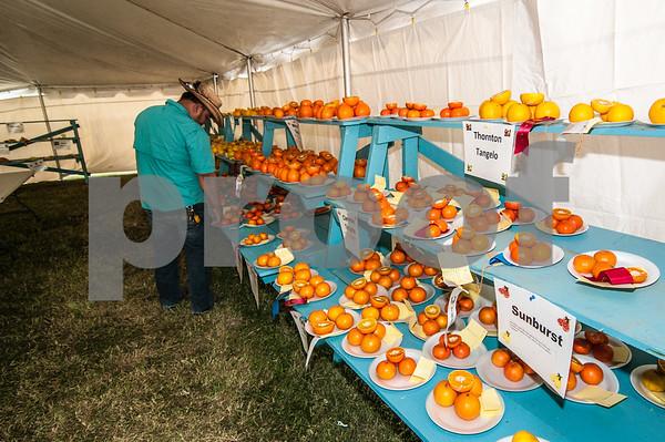 January 30, 2016 - Texas Citrus Fiesta - Youth Show_LG