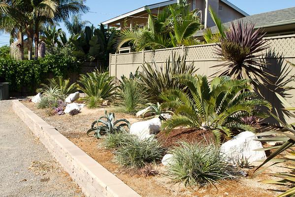 Eucalyptus plants and house 9-01-2012