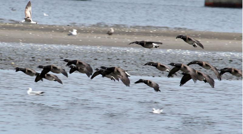 Jamica Bay Shots  April 14 2007 115.jpg