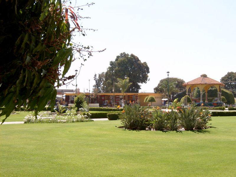 Mexico-Tule-Tree23.jpg