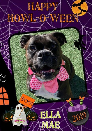 2019 Howl-O-Ween Party