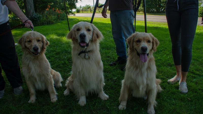 PuppyParty18-580.jpg