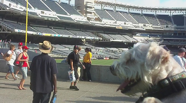 08/27/10 - Dog Days of Summer at Petco Park