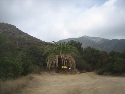 Mt Wilson Trail 11-14-14