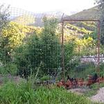 2019-05-12 - Grèce - Amphilochie