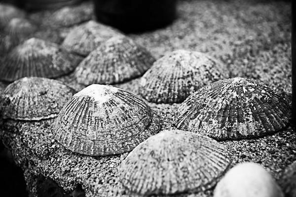 halawa shells.jpg