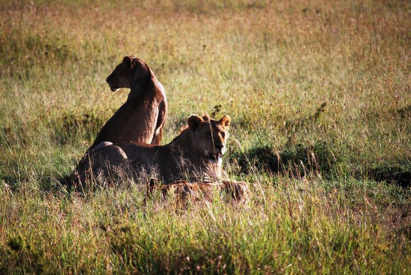 Serengeti (111).JPG