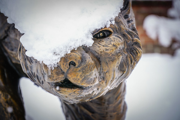 Cardigan's Winter Wonderland