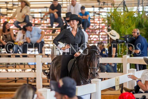 254-Fino Amateur Stallions 7 Years & Older