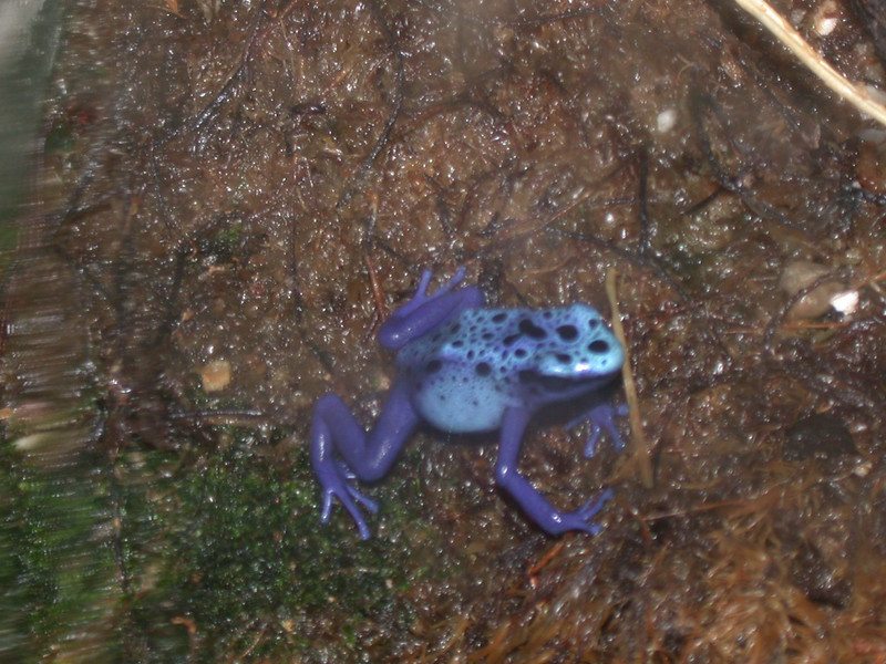 punk rock frog