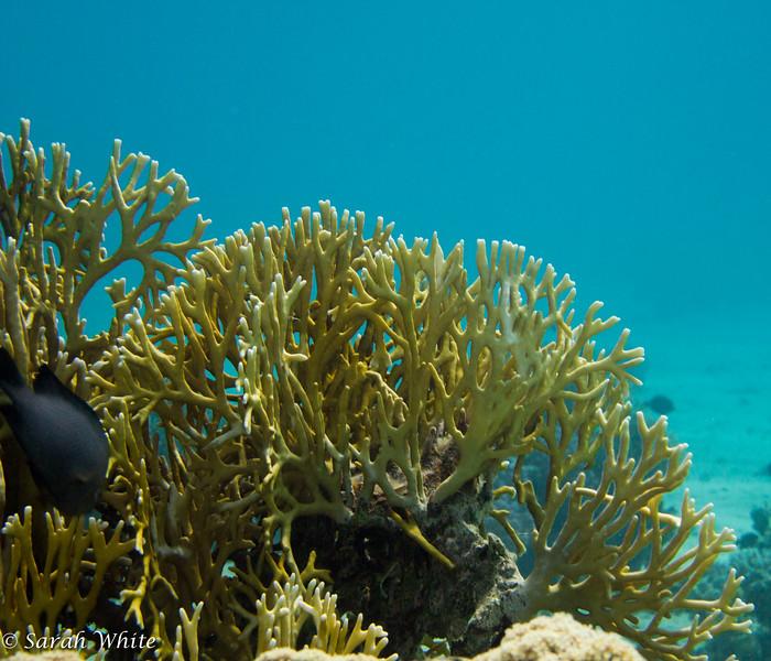 141110_Sharm2014_018.jpg