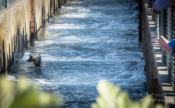 November 2014 Salmon Fish Ladder Nimbus CDFG