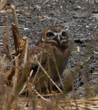 Hooo Are You-Owls