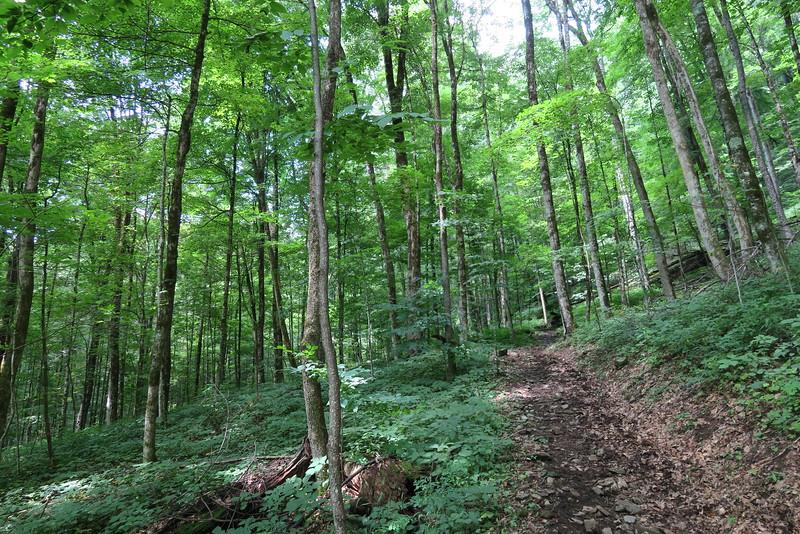 Hyatt Ridge Trail - 3,980'