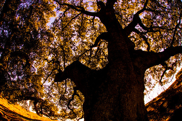 Happy Trees 2017