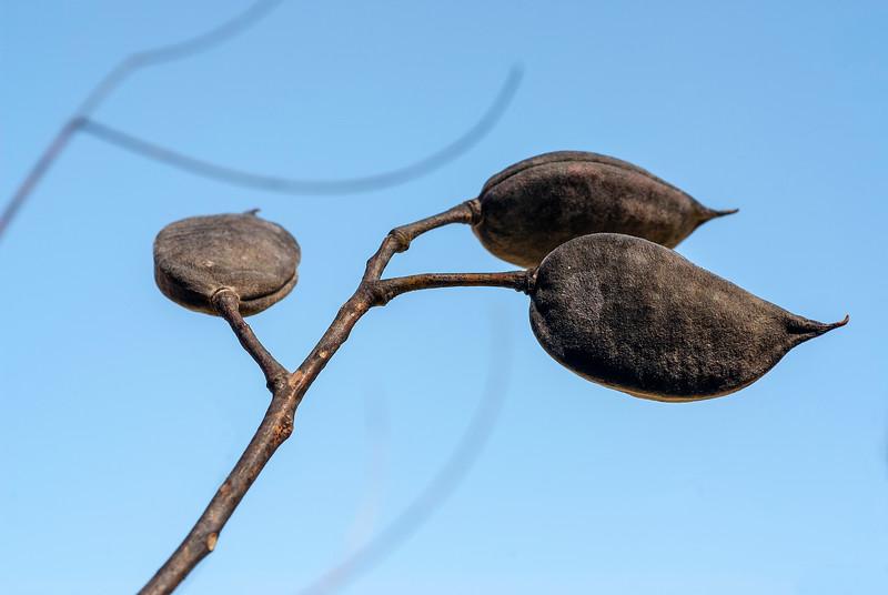seedpods-913.jpg
