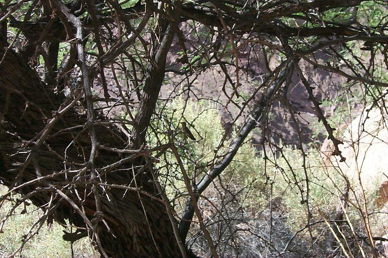 Hummingbird   (May 30, 1999, 04:45pm)