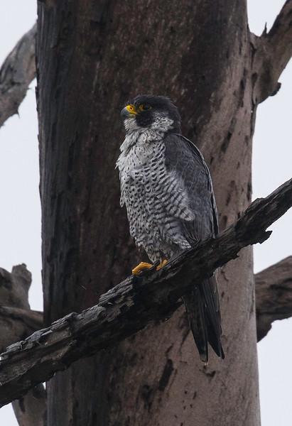 HNBH Birds1-50.jpg