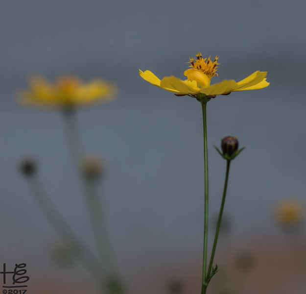 Yellow fall flower