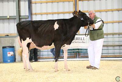 EOWQ Holstein Cows 2018