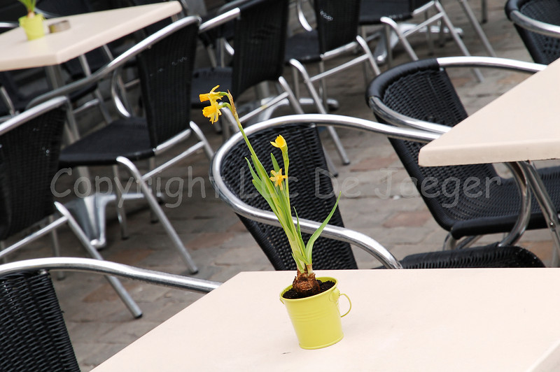 Daffodils on a table on the Old Market (Oude Markt) in Louvain (Leuven), Belgium.