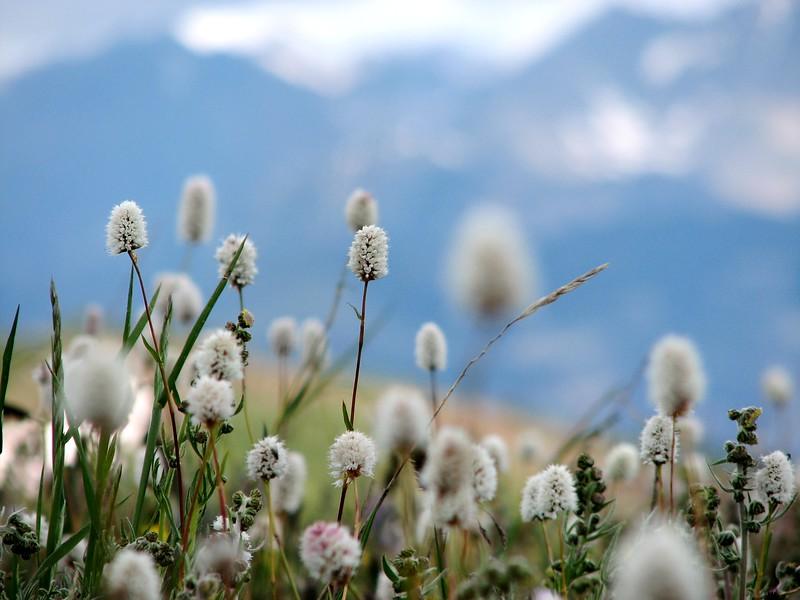amh FLOWERS (1365).jpg