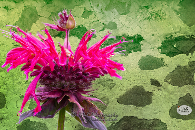 flowerBrick-7537.jpg