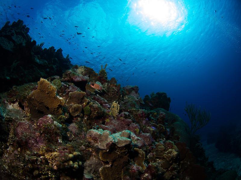 Grand Cayman East End day3-13.jpg