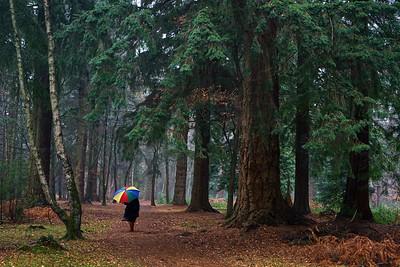 Landscape - Woods