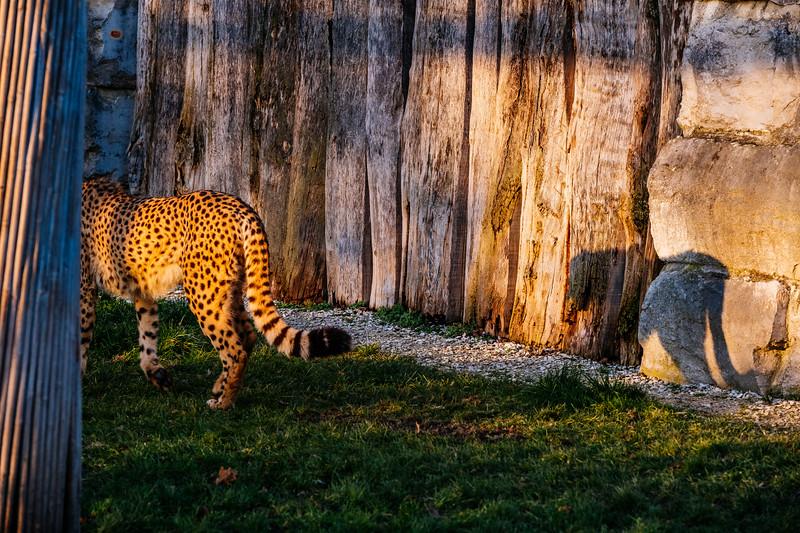 Tonis Zoo-0383.jpg