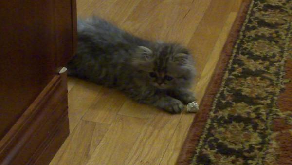 2012 - May Michele Kitty