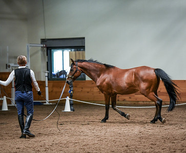 Baroque Equestrian Schooling Show 2019