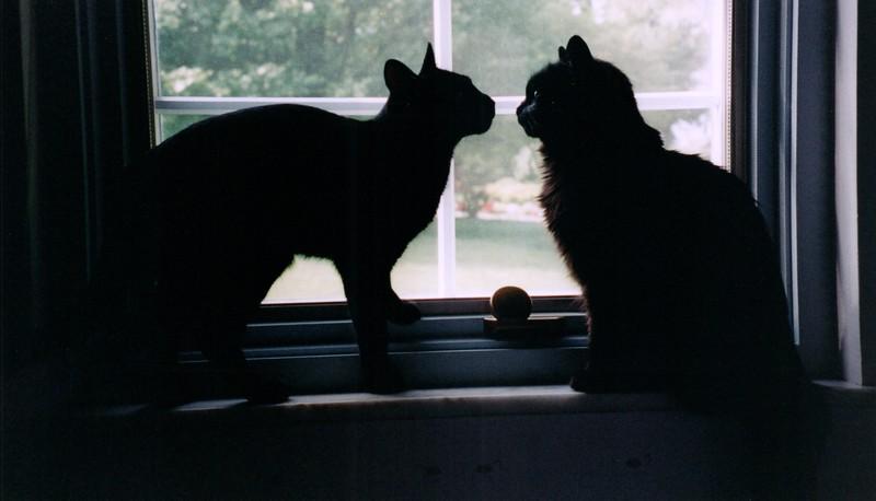 2000_April_More_Cats_0003_a.jpg