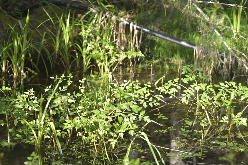 wetlands_23.JPG