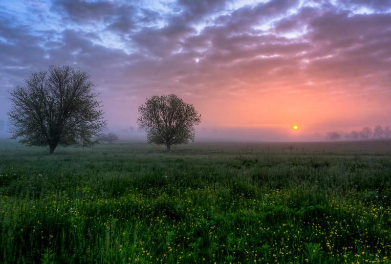 sunrise - fog field with buttercups (p).jpg