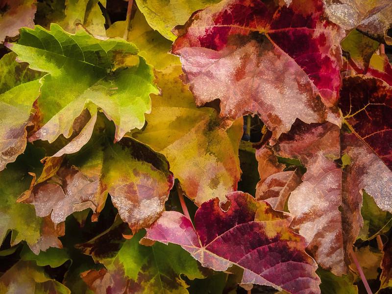 November 16 - Leaves.jpg