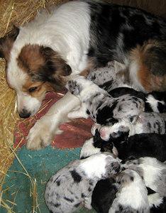 Puppies - Dec 15, 2006