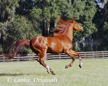 BREEDs of horses