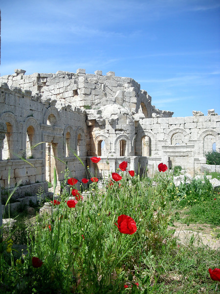 poppies thriving among the ruins of St. Simeon, Syria
