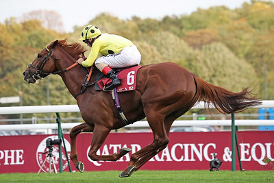 6 Qatar Prix Daniel Wildenstein Gr2 1600m