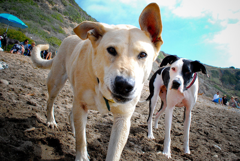 dogs_beach-073.jpg