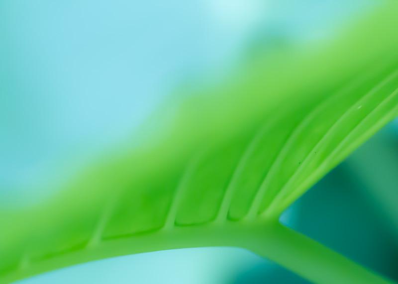 Bamboo Tropicals-7846.jpg