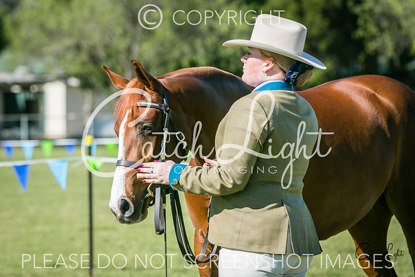203 Ch/Res Led Mare 4yrs+