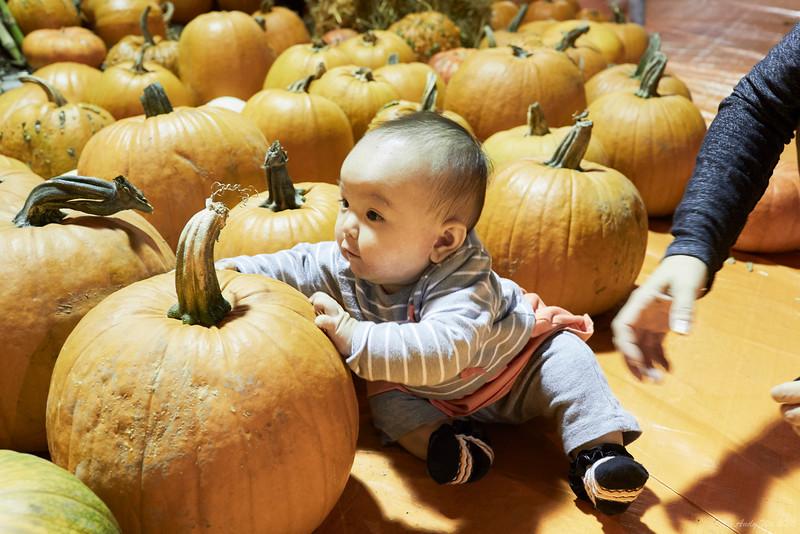 pumpkin__18.jpg