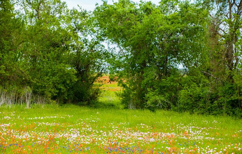 2016_4_9 Texas Wildflower Shoot-8473.jpg