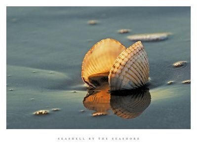 Treasures seashells