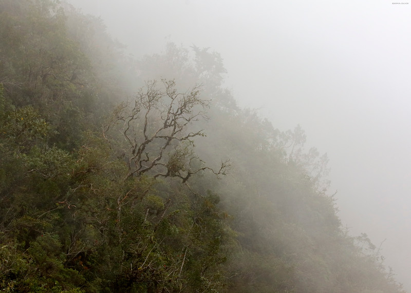 Andean Cloud Forest