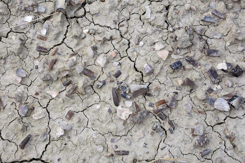 Belamnites-red-gulch-fossil-siteRJD.jpg