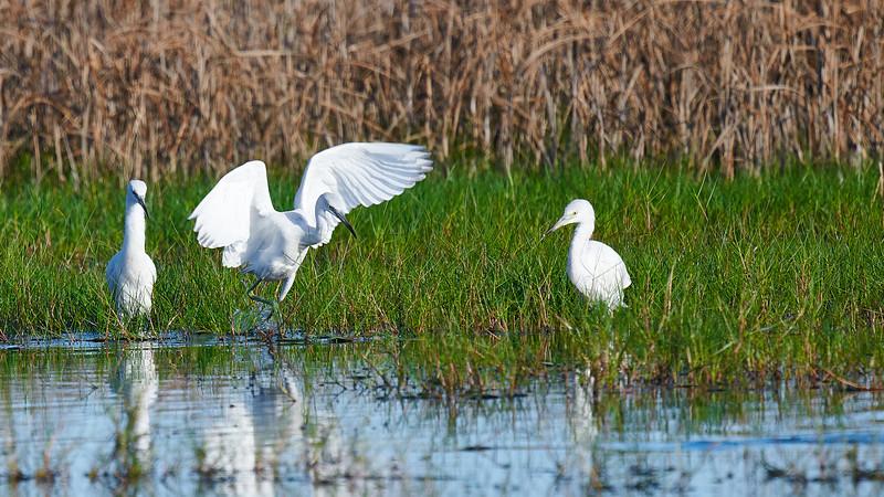 20181103 - Brazoria Wildlife Refuge-85B_3875.jpg