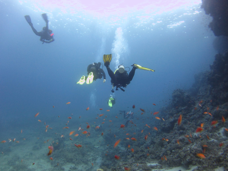 Back end of some divers